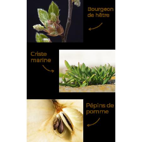 Ekia - Crème initiale Peaux matures - Actifs