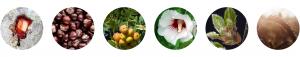 actif baume regard : sangre del drago, marron d'inde, bourgeon cormier, hibiscus, bourgeon de chêne liège, acide hyaluronique